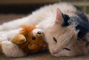 Grief and loss with sad kitten lying on floor holding a stuffed little teddy bear in it's paws